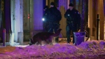 Montreal police and their search dogs examine Nicolet and Ste. Catherine St. on Nov. 20, 2018