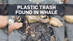 Whale waste
