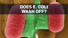 Dealing with food contaminated with E. coli