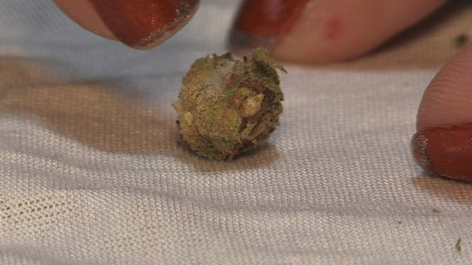 Mould is seen sprouting from cannabis a customer says was purchased through the Ontario Cannabis Store.
