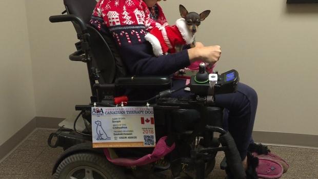 Frustration over service dog | CTV News Saskatoon
