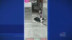 Trending: Who let the dogs out?
