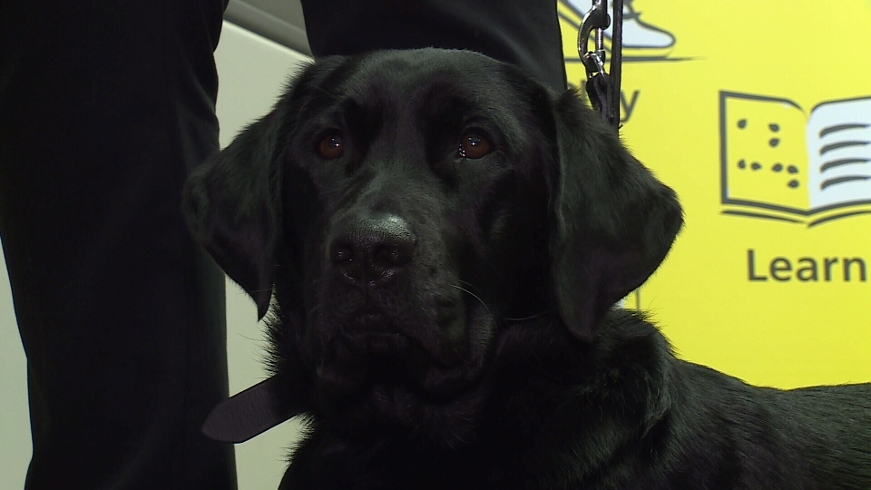 Danson is Ashley Nemeth's new guide dog
