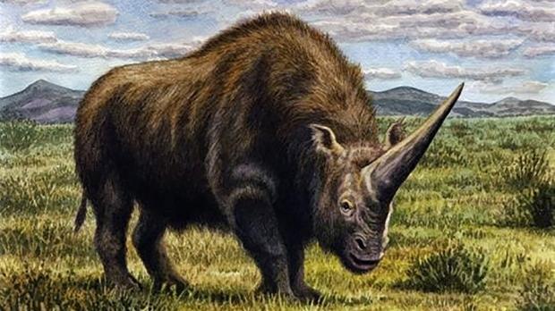 Eurasian ice age wiped out the Siberian unicorn
