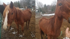 Two photos of horses on a property