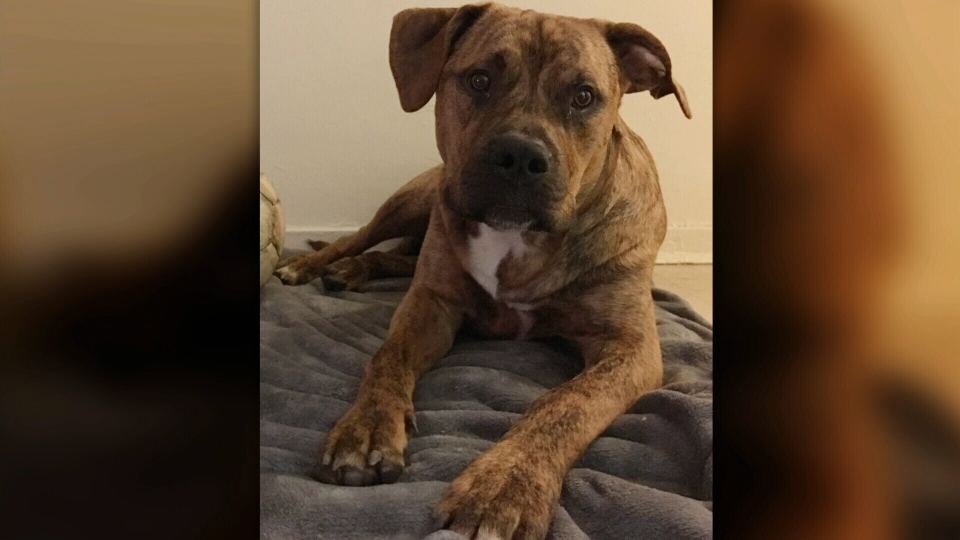 Support dog allegedly stolen outside mall