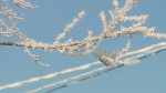 Frost problematic for power lines