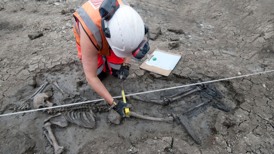 The 500-year-old skeleton and his leather boots was discovered in the deep mud of the banks of the River Thames in London. (MOLA Headland)