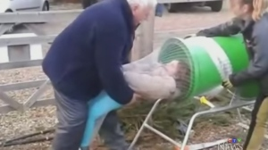 Trending: One way to net a tree
