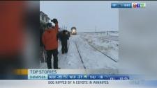 Selkirk threats, Churchill train: CTV Morning Live
