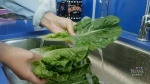 The massive romaine lettuce recall has been partia