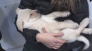Sleeping puppy at North Bay Humane Society available for adoption