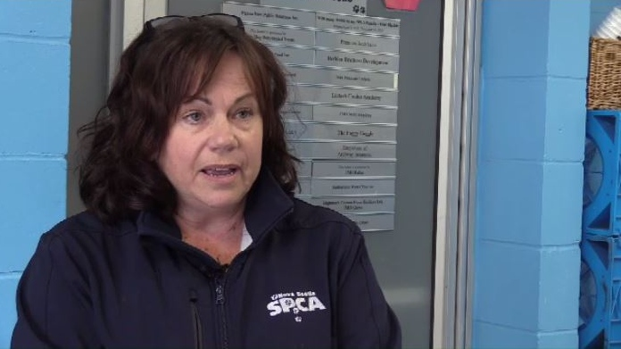 """There were approximately 10 dogs removed from the home, and that in itself put an extremely difficult strain on our Waterville shelter,"" said Joanne Landsburg, the chief provincial inspector for the Nova Scotia SPCA."