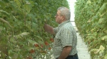 Bob Mitchell, owner of Suntech Greenhouses.