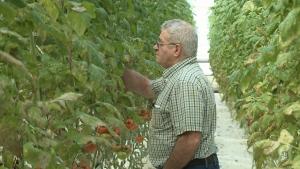 Bob Mitchell, owner of Suntech Greenhouses.