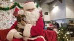 Pets pose with Santa at a Manitoba Mutts Dog Rescue fundraiser in Winnipeg on Dec. 8, 2018. (Source: Daniel Timmerman/CTV News)