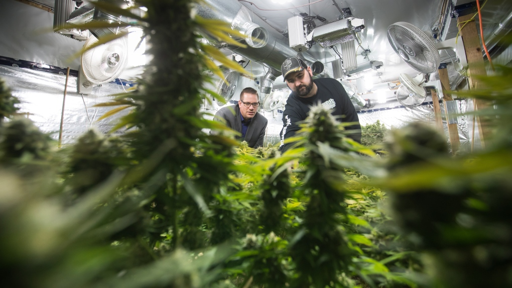 Aspiring 'craft' cannabis producers running into unexpected roadblocks