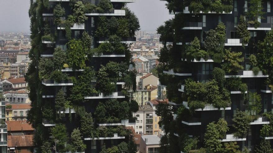 milan trees