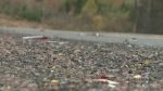 N.S. gov't seeks approval to twin Highway 104
