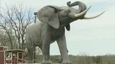 Story of 'Jumbo the Elephant' coming to the stage