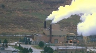 Interveners step into carbon tax battle
