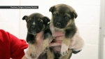 Abandoned puppies rescued - Calgary Humane Society