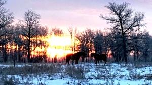 Bessie and Cowboy at Cloud 9 Ranch. Photo by Tara Reimer.