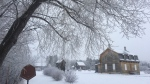 CTV News Winnipeg viewers captured wintry scenes brought on by the weather Wednesday.  Source: Carl Walton. Taken at St. Norbert Park.