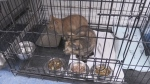 Two young cats left trapped in roadside ditch