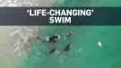 orca swim