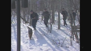 Sudbury police conduct K9 search in wooded area for Renee Sweeney murderer in 1998