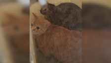 Frosty and Snowcone are improving after being treated for extreme cold exposure. (Source: Simcoe and District Humane Society)