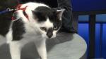 Pet of the Week: Bella
