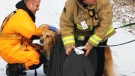 Firefighters in Oshawa saved a dog from waters in Oshawa on Dec. 13, 2018.