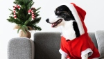 Lucky humans won't be the only ones unboxing designer jewelry, handmade Italian sweaters and hot new toys this holiday season. So will some spoiled dogs and cats. (Pexels/rawpixel.com)