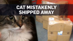 Cat plays in boxes, gets shipped across Canada