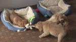 Four puppies placed up for adoption at the London Humane Society