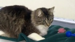Cat back returns home after sneaking into parcel