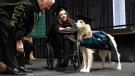 """Griffin"" Hawley, the Golden Retriever service dog, is presented an honorary diploma by Clarkson University President Tony Collins, left, during the Clarkson University ""December Recognition Ceremony"" in Potsdam, N.Y., Saturday, Dec. 15, 2018. (AP Photo/Steve Jacobs)"