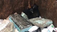 Two cubs that somehow became trapped in a Sooke garbage bin Monday were reunited with their mother thanks to BC Conservation officers. Dec. 17, 2018. (BC Conservation Officer Service)