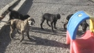 Donations needed after 30 dogs surrendered