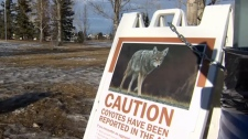 Coyote warning sign in Airdrie