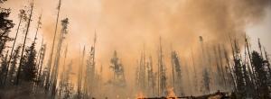 b.c wildfire