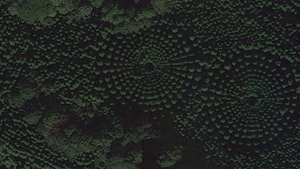 Mysterious 'crop circles' in Japan are actually a 50-year-old experiment