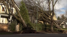 Thursday's powerful windstorm toppled trees onto homes, highways and power lines. Dec. 20, 2018.