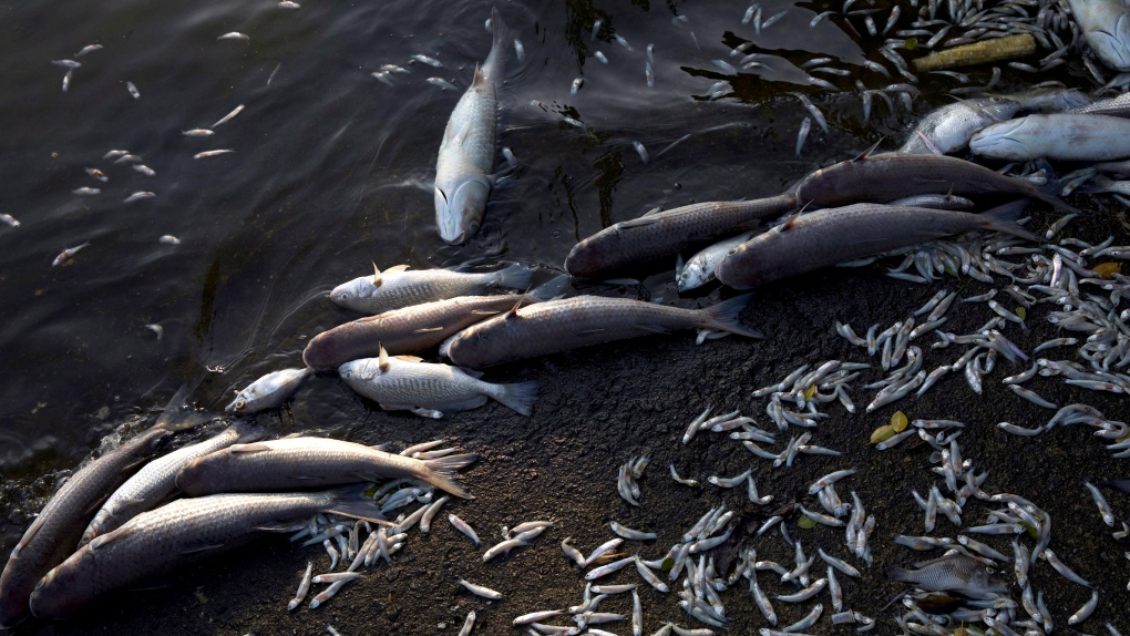 13 tons of rotting dead fish wash up in Rio de Janeiro lagoon