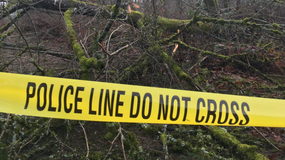 Police tape cordons off a wooded area in Duncan where a powerful windstorm toppled a tree, killing one woman in a tent and injuring two men. Dec. 21, 2018. (CTV Vancouver Island)