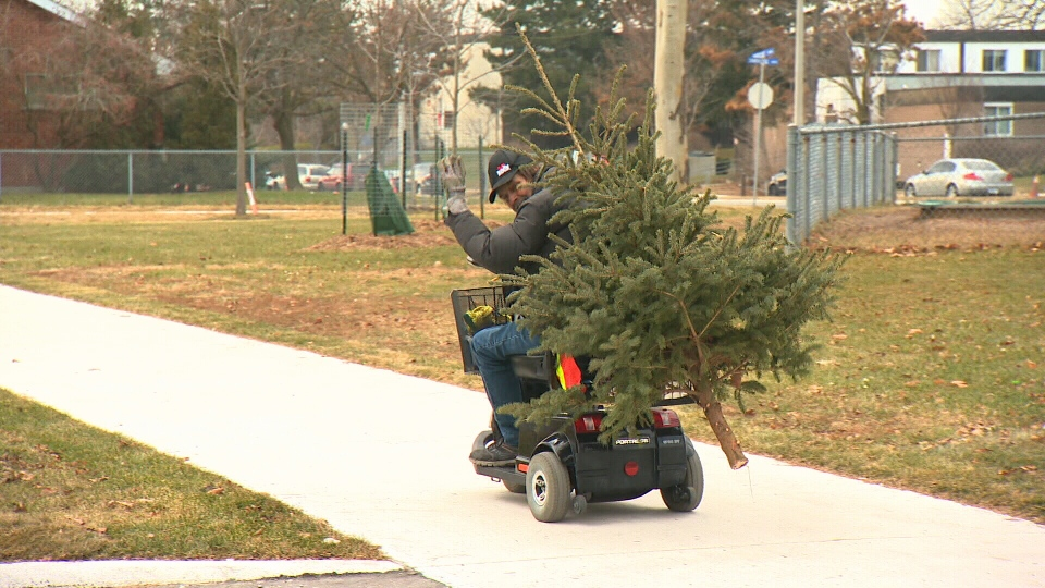 A resident picks up a free Christmas tree from Jessey Njau.