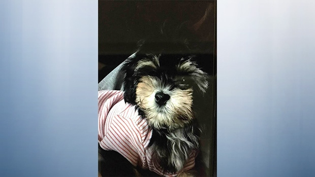 Best Christmas present': Stolen puppy returned to family | CTV News