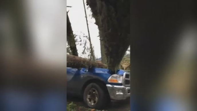 Multiple trees crashed down onto a truck on Salt Spring Island after a devastating windstorm Dec. 20. (Facebook)